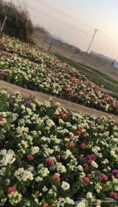 مشاتل الفهد لبيع الشتلات والزهور