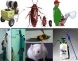 مكافحة حشرات رش مبيدات بالرياض تعقيم المنازل