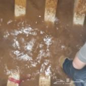 شركة تنظيف مجالس تنظيف خزانات مكافحة حشرات
