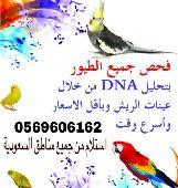 عرض خاص لتحليل DNA للطيور