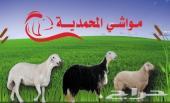 تيوس ذبايح ومواشي المحمدية طيبه مع الضمان