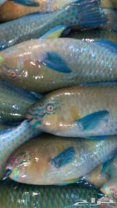 سمك للبيع طازج يوميا وبارخص الاسعار