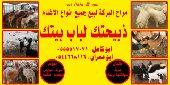 طليان حرية وسواكن تربية وتيوس بلدية لباب بيتك
