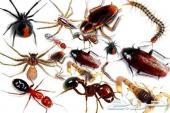 رش مبيدات رش حشرات صراصير نمل نامس وزغ
