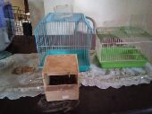 اغراض قطط وعصافير