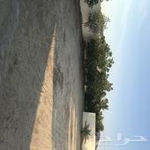 قطعتين ارض في ملكان 1000 م للبيع