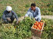 استقدام جميع المزارعين والعمال من مصر والصعيد