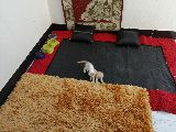 قطط للتبني او التبديل