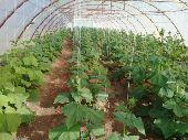 مزرعه للبيع من المالك مساحه كبيره وبيوت محميه