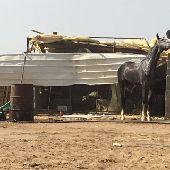 حصان للبيع الملقب صقلان يااام