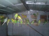 جزيرة الطيور  .