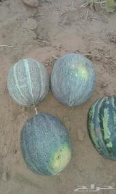 محصول مزرعة خربز
