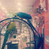 محل طيور الأحلام.طيور قطط أسماك ومستلزماتها .
