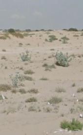 للبيع أرض في مدينة بيش خلف قرية البطنه 3600م