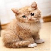 الي عندة قطة لتبني من الخميس يراسلني