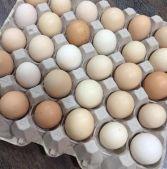 بيض بلدي او عربي لتفقيس والاكل