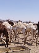 مزاد على حشووو  الى المغرب