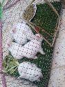 للبيع ارانب العدد خمس اليفات تصلح للاطفال