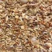 أصداف وقواقع ورمل البحر الطبيعي مضاف عليه عظم الحبار المطحون