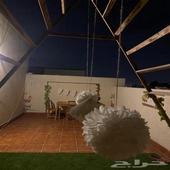 شقة مفروشة فاخرة للايجار