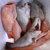 طلبيات اليوم سمك