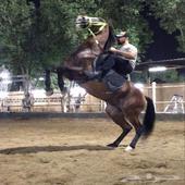 خيل - حصان شعبي