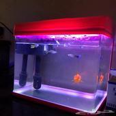 حوض اسماك مع الفلتر والاكسجين والاكل و4 اسماك