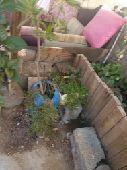 بيت للبيع في حي الشربتلي في ينبع