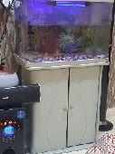 حوض - حوض سمك مع السمك