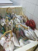 سمك طازج ولذيذ لأهل طيبه