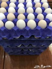 بيض بلدي مخصب