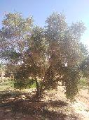 تنسيق حدايق بجمع انواع اشجار