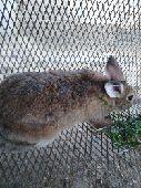 ارنب للبيع محايل عسير