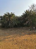 مزارع وقطع أراضي للبيع