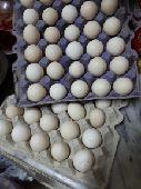 بيض بلدي طازج وبيض سمان