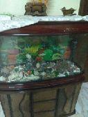 حوض سمك للبيع على سوم
