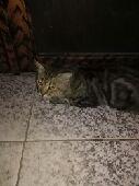 قط - قط ذكر العمر 11 شهر