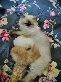 قطة مع 2 كيتن