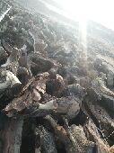 حطب شلايخ سمر لبيع اتوصل على الجوال