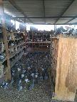 حمام زاجل للبيع الاحساء