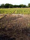 ثلاث قطع الراضي زراعي بصك واحد 2000م مربع