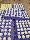 بيض دجاج بلدي مخصب عالي الامانه