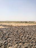 ارض زراعية للبيع (القفيف)