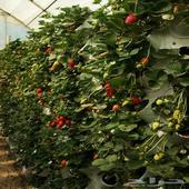 نظام زراعة مائية للمنازل