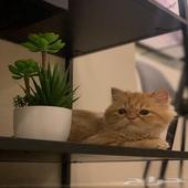 قطط - تنظيف قطط بالبيت بسعر