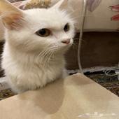 قطة للتبني