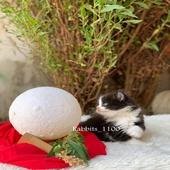 قطط كتن قطوه بسه بسس