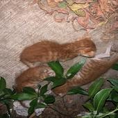 تبني 3 قطط حديثي الولاده - الخبر