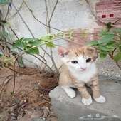 قطط للتبني