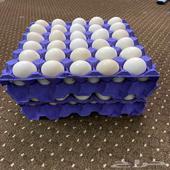 بيض فيومي ألمنيوم